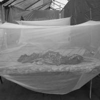 Sudan files - Kala Azar outbreak, Malakal, December 2010