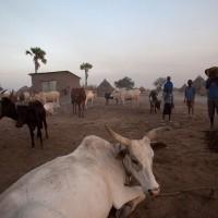Sudan files - Along the Nile, December 2010