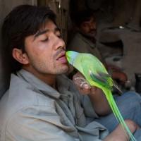 The bird market, Kabul, Afghanistan, April 2010